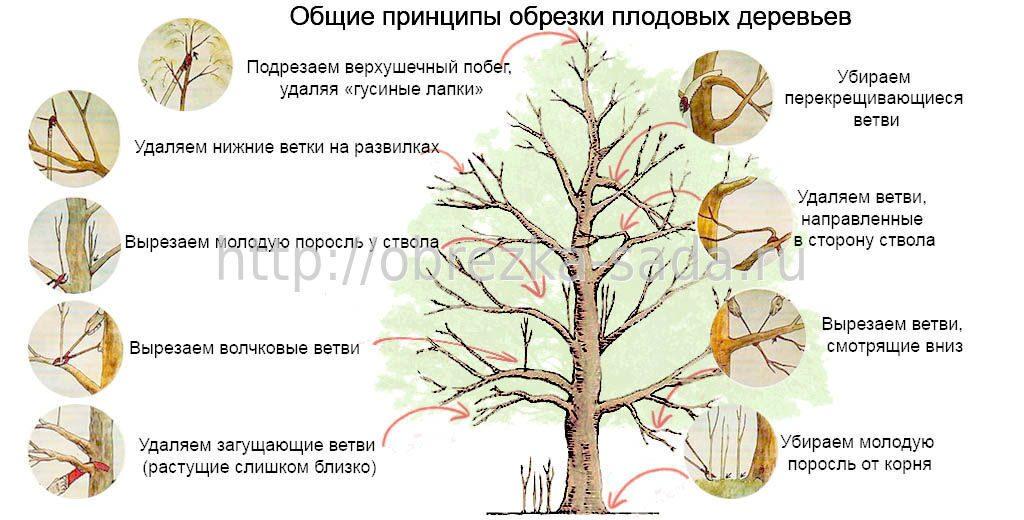 Схема обрезать деревья