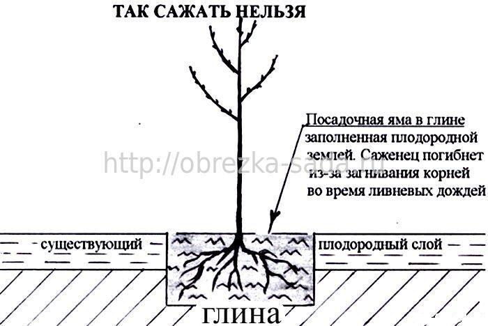 Как сажать деревья в глинистую почву