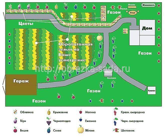 фотосессия, свадебный, схема распределения фруктовых деревьев на участке снять