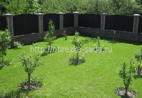 Когда в саду сажать деревья 675