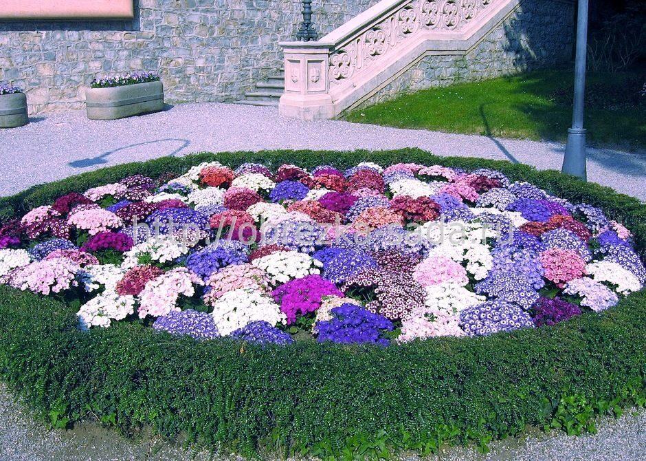 Фото и дизайн цветочных клумб своими руками