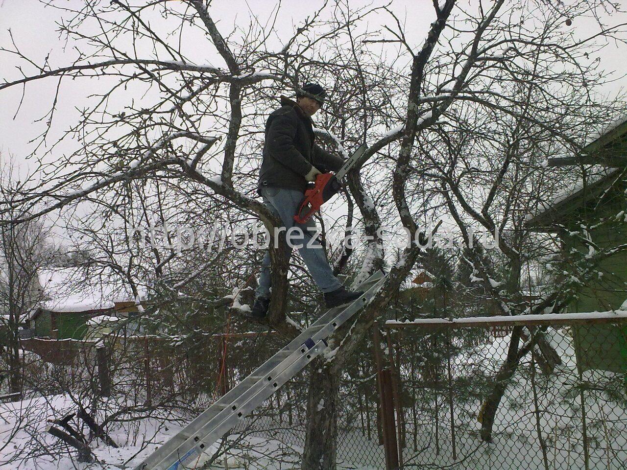 Обрезка яблонь Обрезка деревьев весной Обрезать деревья зимой Киев.
